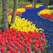 Keukenhof Gardens — Stock Photo #4607249