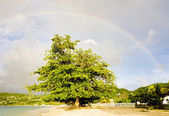 Rainbow over Grand Anse Bay, Grenada — Stock Photo