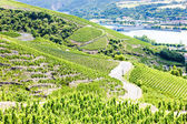 Grand cru vineyards near Ampuis, Cote Rotie, Rhone-Alpes, France — Stock Photo