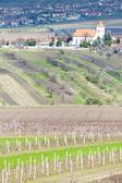 ブドウ畑が広がる、チェコ共和国 kobyli — ストック写真