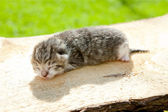Newborn kitten — Stock Photo