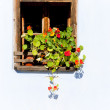 Window with flowers — Stock Photo #4673005