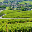 Постер, плакат: Vineyards Burgundy France