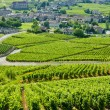 Vineyards, Burgundy, France — Stock Photo