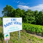 ������, ������: Vineyards Burgundy France
