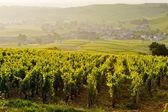Vineyards, Burgundy, France — Stock Photo
