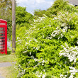 Telephone booth — Stock Photo #4797947
