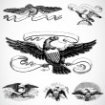 Vector Eagle Set — Stock Photo #3526939