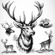 Vector Buck Deer — 图库照片