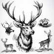 Vector Buck Deer — Foto de Stock