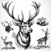 Vector Buck Deer — Stock Photo