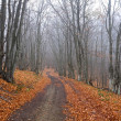 Road in autumn forest — Stock Photo #2713136