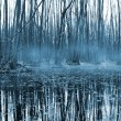 Misty forest om bog — Stock Photo #2713591