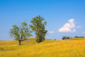 Yellow meadow wuth tree — Stock Photo