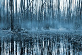 Misty forest om bog — Stock Photo