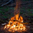 Royalty-Free Stock Photo: Fire in forest