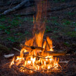 Fire in forest — Stock Photo #2779377