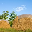 Two haystack — Stock Photo