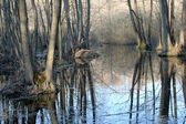 Swamp forest — Stock Photo