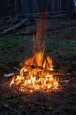 Fire in forest — Stock Photo