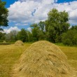 Haystacks on meadow - Stock Photo