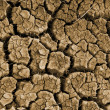 Clefts on dried soil — Stock Photo