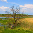 Stock Photo: Alone leafless tree near backwater