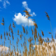 Cane on blue sky background — Stock Photo