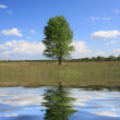 Alone tree with water reflection — Stock Photo #2803945