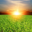 Sunset over green field — Stock Photo #2804102