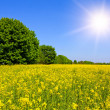 Rape field — Stock Photo #2804144