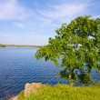 Alone tree on riverside - Stock Photo
