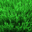 Green grass — Stock Photo #2809374