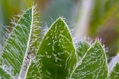 Dewdrops on leafs — Stock Photo