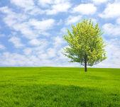 árvore no campo verde — Fotografia Stock