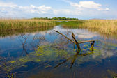 Fishing plase on flux river — Stock Photo