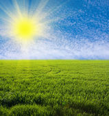 Green grassland — Stock Photo