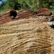 Stock Photo: Tree beam cutoff texture