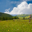 Royalty-Free Stock Photo: Meadow in mountains