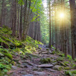 Wallking path in forest — Stock Photo #2820376