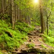 Pathway in mountains forest - Stock Photo