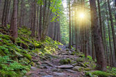 Wallking path in forest — Stock Photo