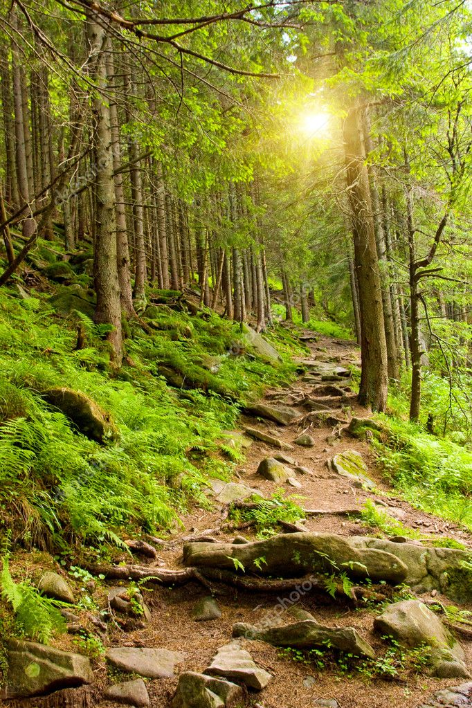 Pathway in mountains forest  Stock Photo #2820392