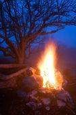 Hot campfire — Stock Photo