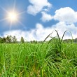 Sun in cloudly sky over green grass — Stock Photo #2952825