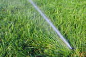Water flush and green grass — Stock Photo