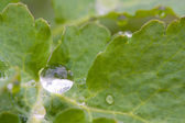 Waterdrops on green leaf — Stock Photo
