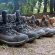 Tourists boots in forest - Stockfoto
