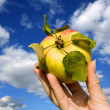 Fresh apple in hand - Stockfoto