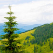 Stock Photo: Mountain landscape with tree